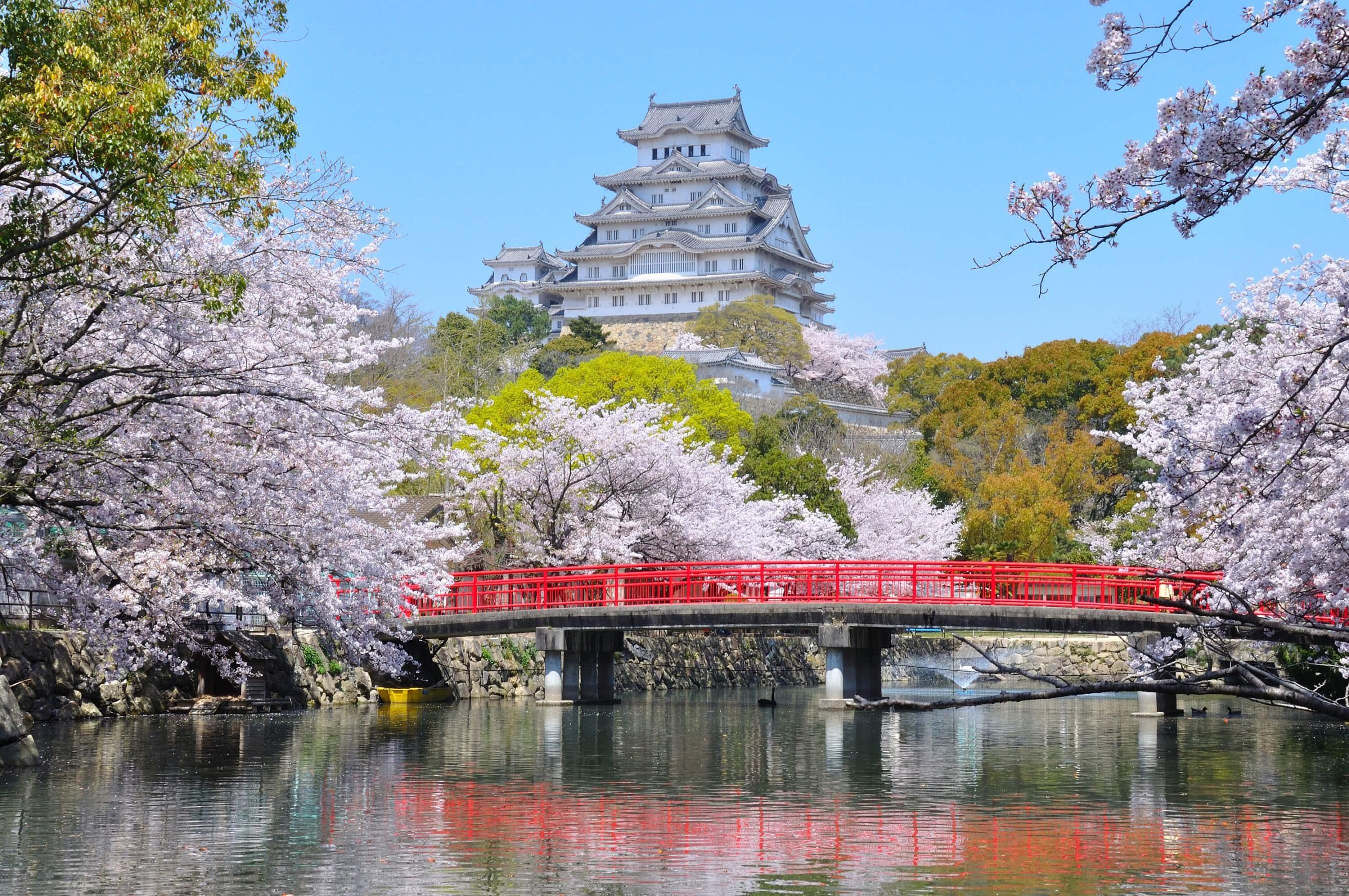 「姬路城 櫻花」的圖片搜尋結果